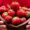 Як садити полуницю восени
