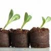 Як садити розсаду огірків в торф`яні горщики і таблетки? Переваги та недоліки такої тари, правила посадки та догляду за молодими рослинами