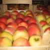 Як зберегти яблука на зиму в погребі чи підвалі?