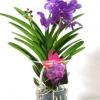 Як доглядати за вандою, королевою орхідей
