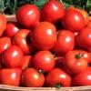 Як збільшити врожайність томатів: маловідомі прийоми