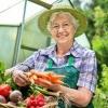 Як вирощувати овочі в теплиці з полікарбонату з високою врожайністю: особливості технології