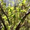 Як захистити рослини від шкідників без хімії