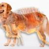Як же їх прогнати? Блохи у собаки: як вивести покупними і народними засобами, обробка для профілактики