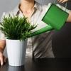 Які бувають добрива для кімнатних рослин?