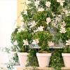 Які квіткові горщики краще купити - види, матеріали, розміри.