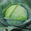 Які добрива під капусти необхідно вносити для отримання хорошого врожаю