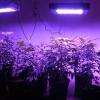 Який лампою підсвітити розсаду, що таке фітосвет і як використовувати діоди?