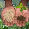 Яку користь приносять фосфорно-калійні добрива?