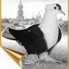 Яку породу голубів вивели ченці києво-печерської лаври?