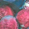 Капуста червонокачанна, її смакові, дієтичні властивості, сорти, агротехніка