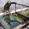 Кожен садівник на ділянці може побудувати зимовий парник своїми руками