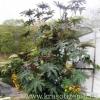Рицина - однорічний гігант в саду