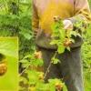 Колотилов владимир андреевич, садівник-опитнікамі з підмосков`я, садові колекція