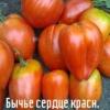 Корида з томатами: характеристика і опис сорту «бичаче серце червоне»