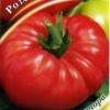 Великі яскраві плоди принесуть радість, а смак ви не забудете ніколи - опис сорту томату «розмарин фунтовий»