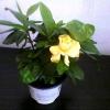 Посадила з насіння бальзами (мокрий іван)