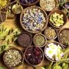 Лікарські трави для магії: як правильно збирати