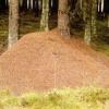 Лісові і садові мурахи: види, особливості, шкода і користь