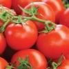 Улюбленець багатьох овочівників - томат «мрія ледаря»: опис сорту, врожайність і особливості вирощування