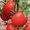 Улюблений багатьма томат «подарунковий»: опис і особливості сорту