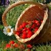 Місячний календар садівника городника на червень 2016 року