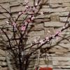 Майстер клас. Квітуча гілка сакури.