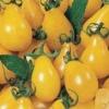 Медова крапля - цукрові томати кольору бурштину: опис сорту, особливості вирощування