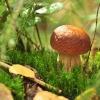 Мікориза - паралельний світ грибів, використання їх в садівництві
