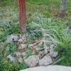 Мій сад в очікуванні зими