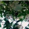 Подскажите название рослини) і особливості догляду
