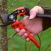 Чи можна обрізати дерева в літню пору і як це правильно робити?