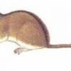 Миші в саду, захист саду від мишей, боротьба з гризунами