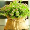 Незвичайна клумба: квіти в мішку