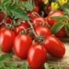 Низькорослі томати: посадка насінням