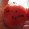 Низькорослий, ранньостиглий гібрид високоврожайних помідор «обские купола», опис і рекомендації по догляду
