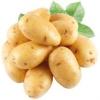 Новітній сорт картоплі каратоп: раннє дозрівання, стабільний врожай