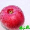 Нові свердловські сорти яблуні в оренбуржье, випробування в розпліднику федора долбня