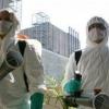 Огляд компаній проводять професійне знищення тарганів у москві, санкт-петербурзі та регіонах рф, опис, особливості, ціни