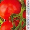 Опис двох варіантів гібридних сортів томата «марісса»