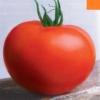 Опис, характеристики, фото сорти томата «персей»