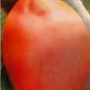Опис, застосування, особливості вирощування томата «де барао гігант»