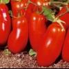 Опис сорту томату «ракета»: характеристики, фото плодів, врожайність, важливі переваги і недоліки