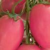 Опис смачного і універсального сорти томатів - «сливка рожева» з фотографіями помідора