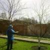 Обприскування плодових дерев навесні. Як домогтися багатого врожаю?