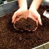 Органічні добрива для городу