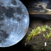 Особливості посіву баклажанів на розсаду за місячним календарем: сприятливі і заборонені дні для посадки, як підготувати насіння