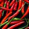 Гострота в вашому домі завжди під рукою: як вирощувати перець чилі в домашніх умовах