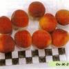 Освоєння і селекція абрикоса в приуралля, опис нових гібридних форм оренбурзькій дослідної станції садівництва і виноградарства