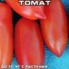 Відмінний сорт томата для вирощування в теплицях - «бурулька рожева»